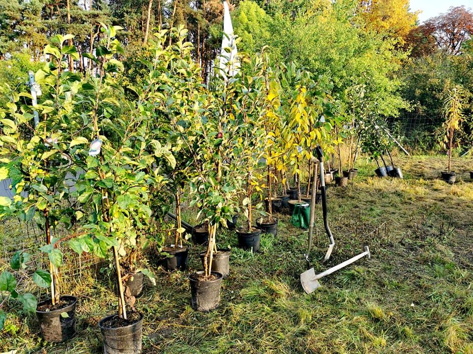 Umweltkids und Unternehmer gemeinsam: Obstbäume für Hohen Neuendorf